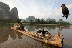 YANGSHUO - JUNE 18: Chinese man fishing with cormorants birds Stock Images