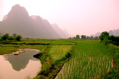 Yangshuo landscape - rice field Royalty Free Stock Image