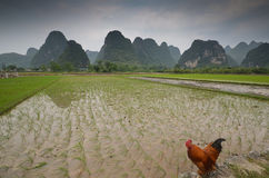 Yangshuo scenery Royalty Free Stock Photos