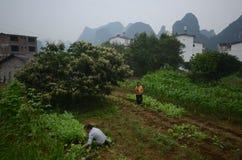 Yangshuo scenery. Green hills in Yangshuo,South China Royalty Free Stock Photos