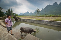 Yangshuo scenery. Local woman and her water buffalo in the green hills in Yangshuo,South China Stock Photography