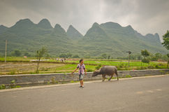 Yangshuo scenery. Local woman and her water buffalo in the green hills in Yangshuo,South China Stock Images