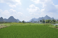 Yangshuo Yulong River rice Stock Photos
