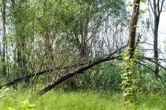 The Yangtze river and deadwood Royalty Free Stock Photos