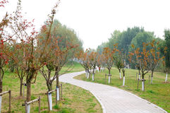 The Yangtze River Park Stock Image