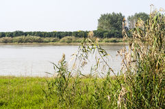 The Yangtze river and reed Stock Photos