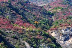 Yangtze Small Three Gorges Trees in Fall Stock Images