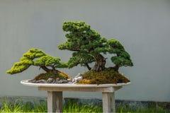 Yangzhou Slender West Lake Bonsai Garden stock photography
