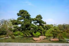 Yangzhou Slender West Lake Bonsai Garden Royalty Free Stock Images