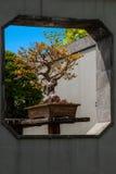 Yangzhou Slender West Lake Bonsai Garden Royalty Free Stock Photography