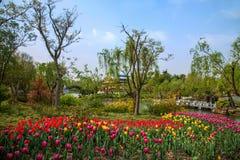 Yangzhou spenslig västra sjöträdgård Arkivbilder