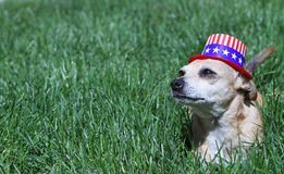Yankee Doodle Doggie Royalty Free Stock Images