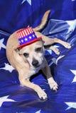 Yankee Doodle Doggie Stock Photos
