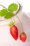 Yaourt et fraisiers communs Photos libres de droits