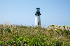 Yaquina Head Lighthouse in bloom Royalty Free Stock Photography