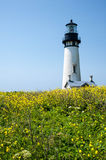 Yaquina Head Lighthouse in bloom Royalty Free Stock Photos