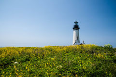 Yaquina Head Lighthouse in bloom Royalty Free Stock Images