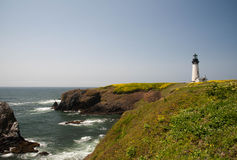 Yaquina Head Lighthouse with wildflowers Royalty Free Stock Photography