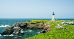 Yaquina Head Lighthouse with wildflowers Royalty Free Stock Photos