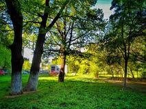 yard Stockfoto