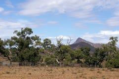 Yard auf Lager gesehen entlang szenischem Antrieb Moralana, die Strecken der Flinders, SA, Australien lizenzfreie stockfotos