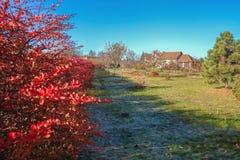 Yard in an autumn. Stock Photography