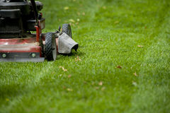 Yard Care Stock Images