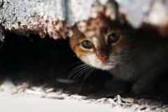 Yard cat Royalty Free Stock Photos