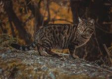 Yard cat Stock Photo