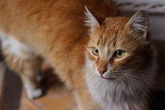 Yard cat Stock Photography