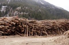Yard de bois de charpente Photographie stock libre de droits