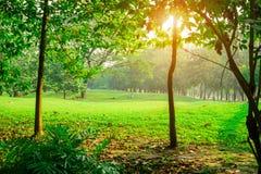 Yard de pelouse d'herbe verte au milieu des arbres sous le matin de lumière du soleil, bois en parc public image libre de droits