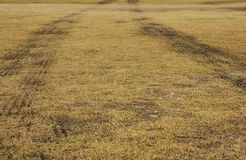 Yard de pelouse de Trace On Mud Soil In de pneu de voiture image libre de droits