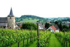 Yard de raisin sur la colline de Limbourg du sud photos libres de droits