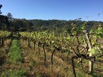 Yard de vigne Photographie stock libre de droits
