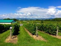 Yard de vigne de Canada du Québec de voyage Photos stock