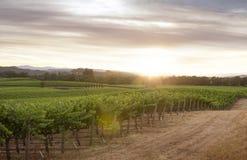 Yard de vin Images libres de droits