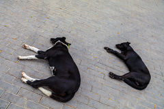 Yard dogs sleep in the street Stock Photo