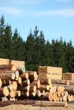 Yard et forêt de bois de construction Photos libres de droits