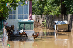 Yard flooded. By heavy rain and birds royalty free stock photo