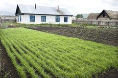 Yard, Haus lizenzfreies stockbild