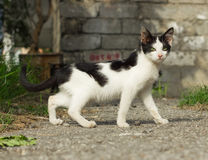 Yard kitten Royalty Free Stock Photo