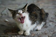 Yard kitten Stock Photos