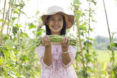Yard long bean Royalty Free Stock Image