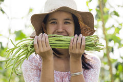 Yard long bean Stock Image