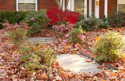 Yard of pretty house that needs yardwork - fall leaves in flowers and on sidewalk. The Yard of a pretty house that needs yardwork - fall leaves in flowers and on stock image