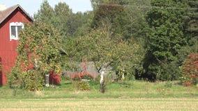 Yard rural de maison de grange dans la saison d'automne Panorama 4K banque de vidéos