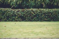Yard vert avec des arbres à l'arrière-plan Images stock