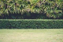 Yard vert avec des arbres à l'arrière-plan Photo stock