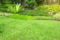 Yard vert frais d'herbe de tapis, pelouse lisse dans le beau jardin et bon soin aménageant en parc en parc public images libres de droits